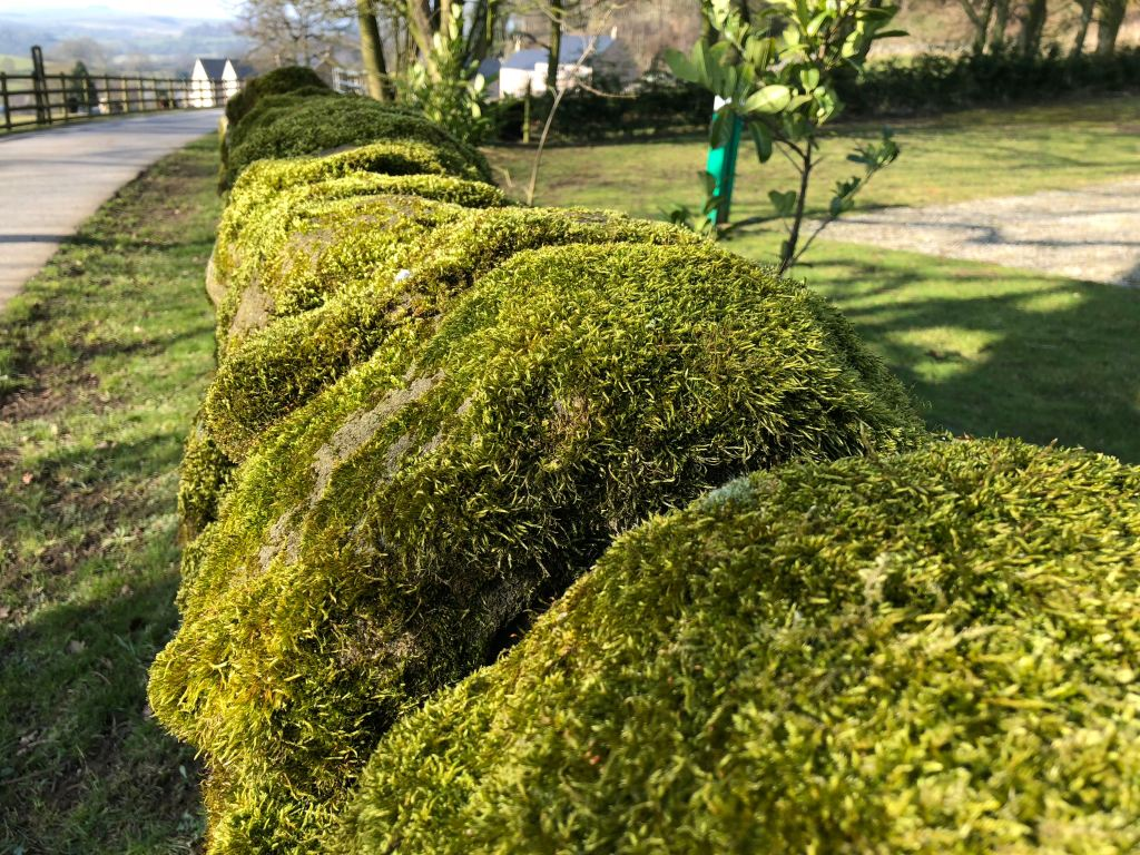 Mossy wall near Nine Ladies